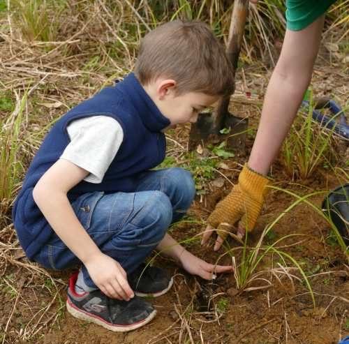Stuart Barton Community Planting Birkenhead War Memorial Park
