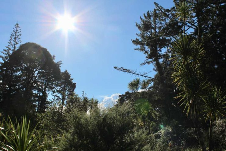 Barbara Phillips: Winter sunrise, Ridgewood Reserve