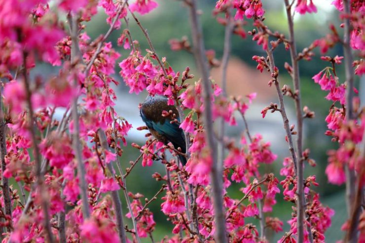 Joanna Hopkins In the Pink - the Tui Has No Chance of Hiding