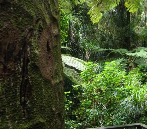 Marcia Roberts Chatswood Kauri on the Edge